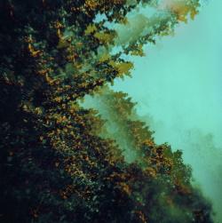 Polymoon - Caterpillars Of Creation